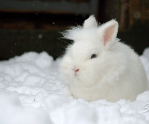 bunnies, snowy, and white bunny image