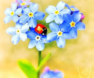 flowers, ladybug, and blue image