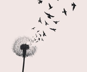 bird, flowers, and fly image