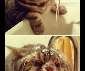 adorable, cat, and water image