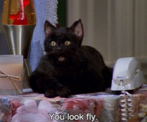 cat, fly, and sabrina the teenage witch image