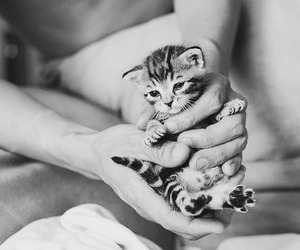 cute, chaton, and tout petit chat image