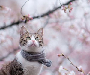 cat, animal, and scarf image