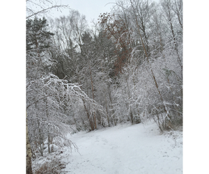 beautiful, trees, and white image