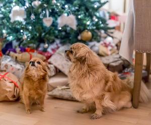 christmas, cosy, and home image