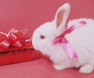 bow, bunny, and pink image