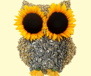 owl and sunflower image