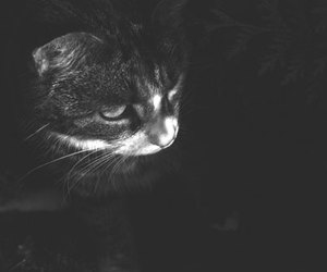 black and white, bw, and kitten image