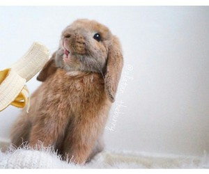 beautiful little bunny image