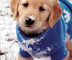 dog, doggie, and snow image