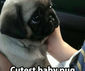 cute, love, and dog image