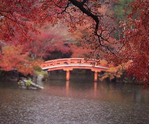 autumn, beautiful, and japan image