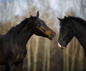 black, horses, and cute image
