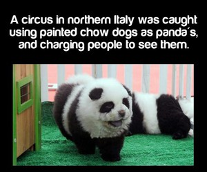 circus, dog, and fact image