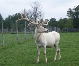albino, ghibli, and antlers image