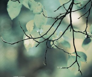 nature, leaves, and tree image
