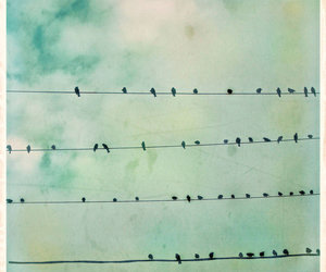 birds and vintage image