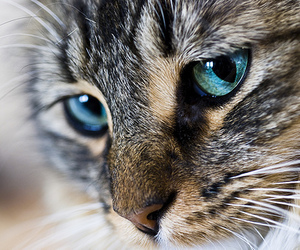 cat, animal, and eyes image