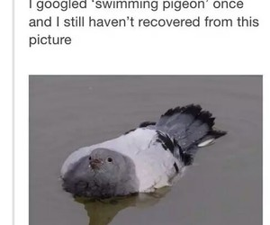 bird, lol, and pigeon image