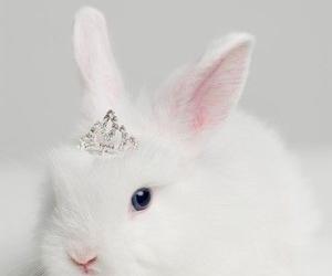 rabbit, bunny, and white image