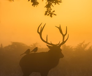 animals and red stag image