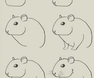 hamster and how to draw image