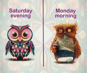 monday and saturday image