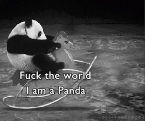 black and white, horse, and panda image