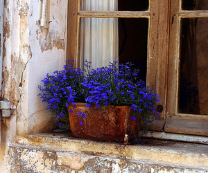 flowers, window, and blue image