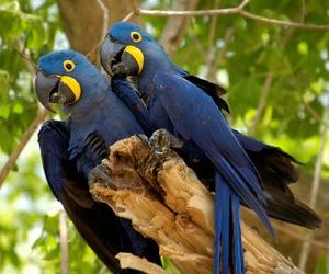 amazonia, arara azul, and brasil image