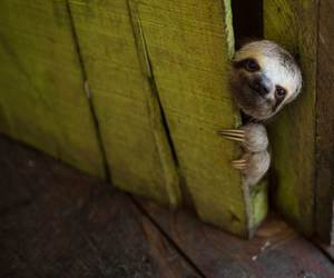 sloth and animal image