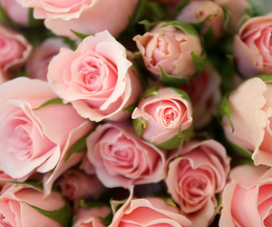 blooms, pink, and blossoms image