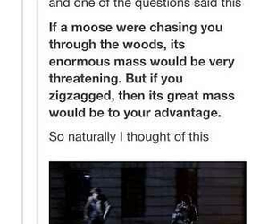 supernatural, funny, and moose image