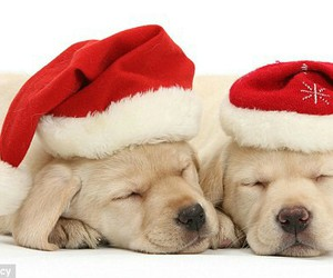 christmas, cute, and puppy image