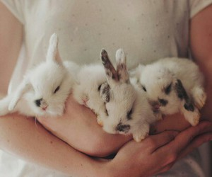 animals, beauty, and bunny image