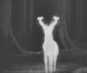 black and white, patronus, and ⚡ image