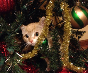 cat, christmas tree, and creeping image