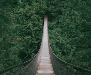 nature, bridge, and green image