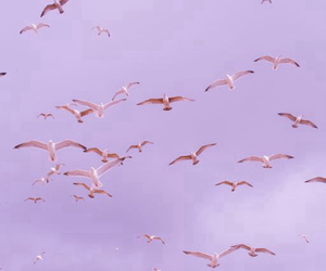 birds, purple, and pastel image