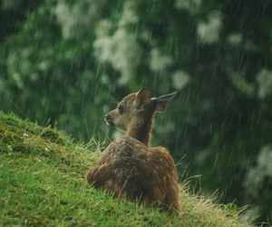 nature, rain, and animal image