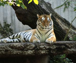 animal, nature, and wildcat image