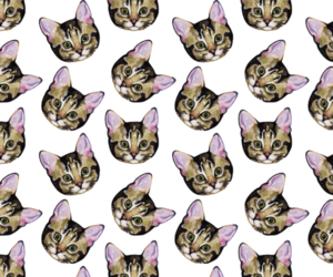 cat, kitty, and background image