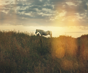 horse and sun image