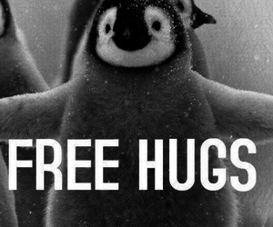 hug, penguin, and free image