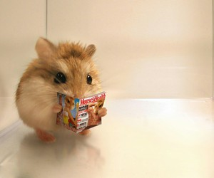 animal, hamster, and reading image