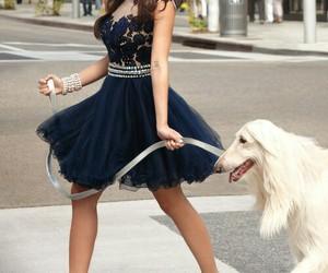 dress and dog image