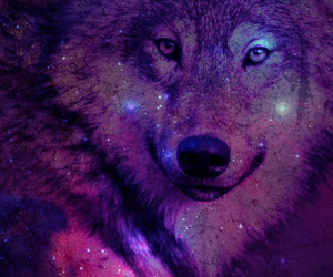 wolf, galaxy, and wallpaper image