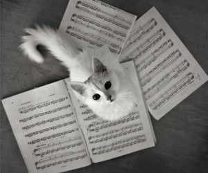 cat, cute, and music image