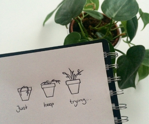 plants, drawing, and grunge image