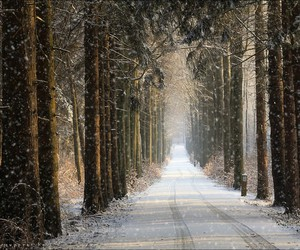 winter, cold, and forest image